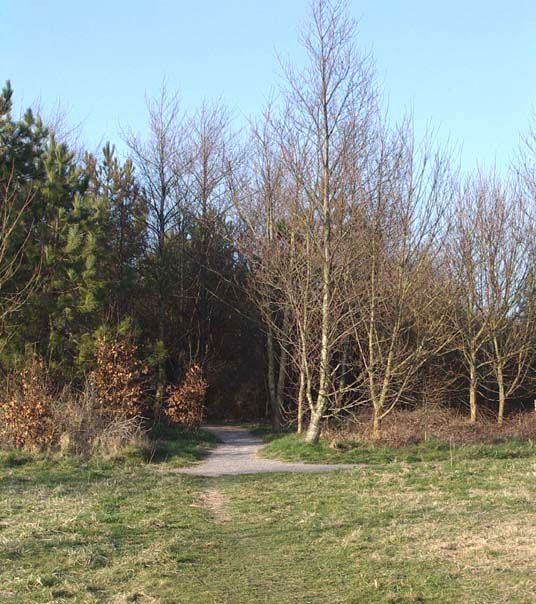 All Terrain Path at Mill Hill leading into the alien species Copse (Photograph by Andy Horton)