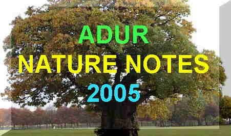 Link to Adur Nature Notes 2005  Index page