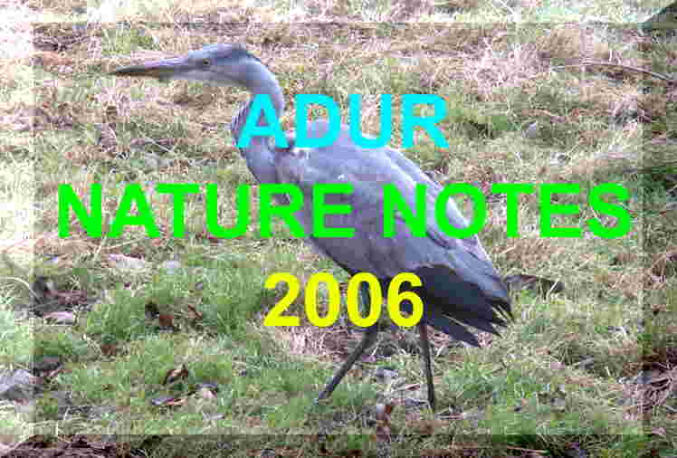Link to the Adur Nature Notes 2006 web pages