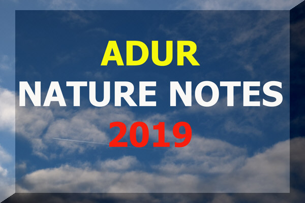 Adur Nature Notes  2019