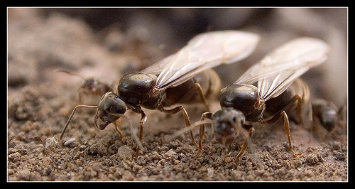 Ants (Photograph by Garry Finch)