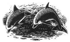 Bottle-nosed Dolphins  by Chris Hicks (Northolt)