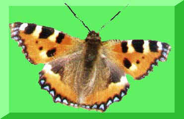 Link to the Adur Butterflies web page