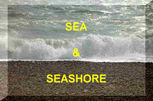 Link to the Sea and Seashore habitats page
