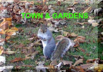 Link to Town & Gardens habitats page