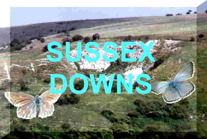 Link to the chalkhill Downs habitats pages