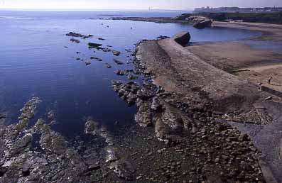 Rocky Shore at Cullercoats (Photograph by Andy Horton)