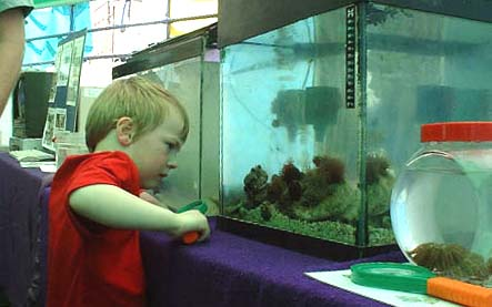 Seashore Aquarium at Adur World Oceans Day 2002