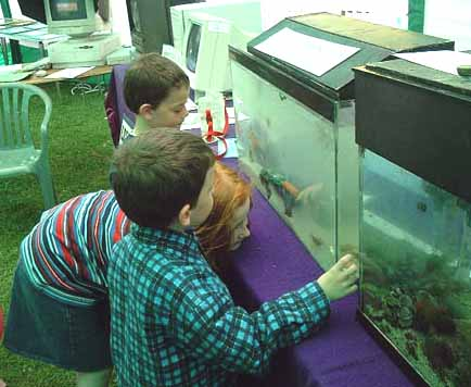Seashore Aquarium at Adur World Oceans Day 2002 (Photograph by Ray Hamblett)