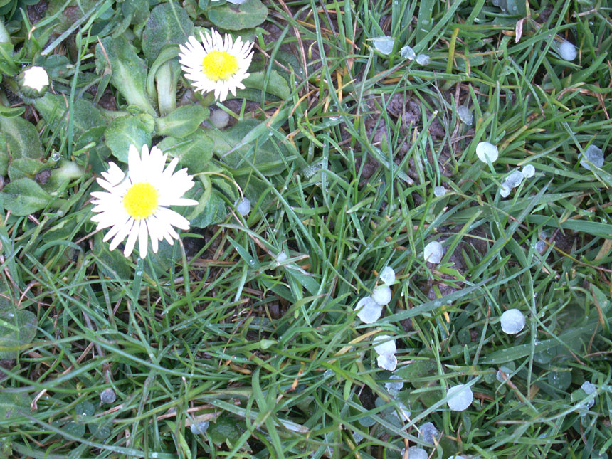 Hailstones and Daisies in Buckingham Park