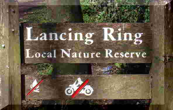 Link to Lancing Ring & Meadows 2006 Nature web pages