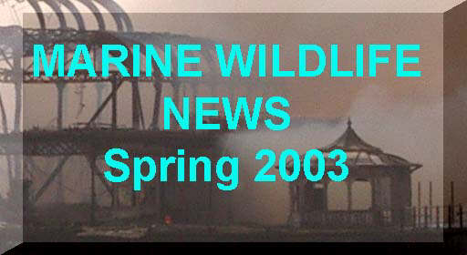 Link to the News page for Spring 2003
