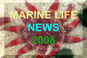 Link to Marine Life News 2008