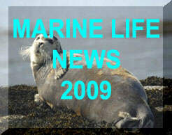 Link to the News web pages for 2009