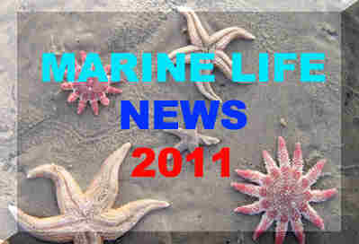 Link to the Marine Life News web pages for 2011