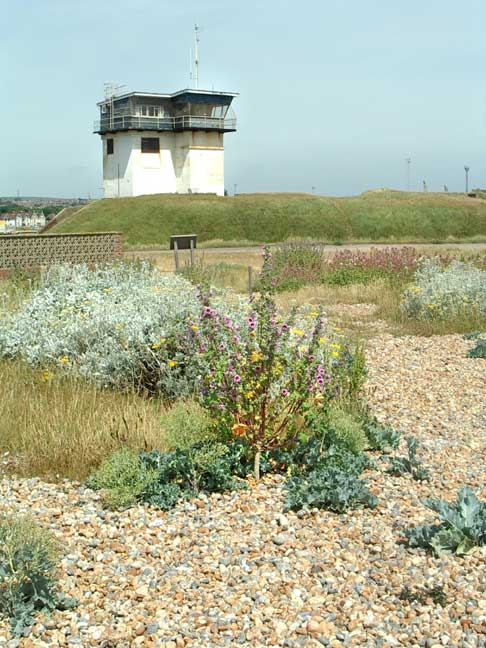 Coastguard Tower on Old Fort with Tree Mallow, Silver Ragwort and Red Valerian in the foreground (Summer Solstice 2005)