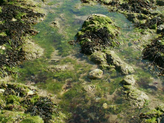 Rock Pools underneath Seaford Head (west of the Seven Sisters) East Sussex.