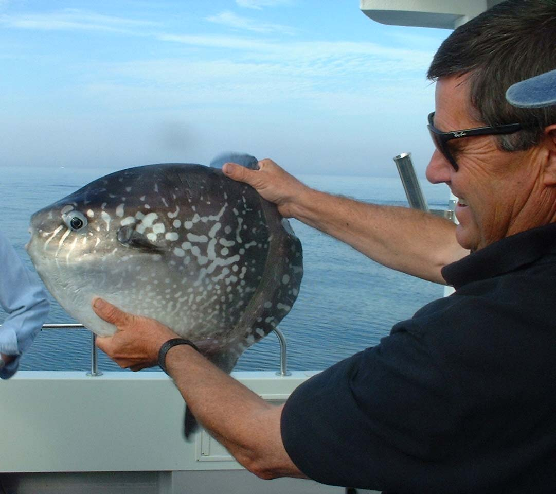 Sunfish from the Isle of Wight (Photograph by Dale Edmunds)