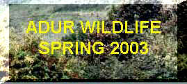 Link to the spring wildlife reports for 2003