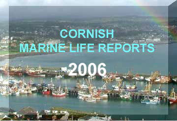 Link to the Cornish Marine Life Reports (by Ray Dennis) for 2006