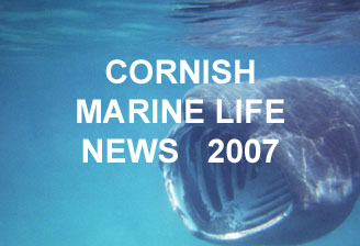 Link to Ray Dennis's Cornish Marine Life Reports for 2007