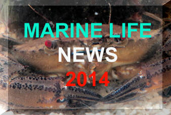 Link to the main news page for 2014