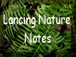 Link to Lancing Nature Notes Blogspot